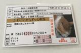 【あさくさ福猫太郎】非売品開運豆お守りの画像(1枚目)