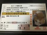 浅草の開運グッズ あさくさ福猫太郎の画像(1枚目)
