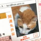 「❁︎あさくさ福猫太郎 開運豆お守り❁︎」の画像(4枚目)