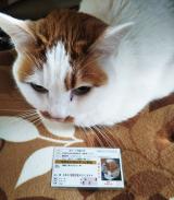 「福猫太郎」の画像(1枚目)