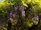 春爛漫の画像(2枚目)