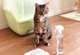純水100%のSHUPPAが家中の掃除に使えて便利!赤ちゃんやペットにも安心♡の画像(4枚目)