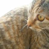 「猫飼い初心者」の画像(2枚目)