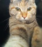 猫飼い初心者