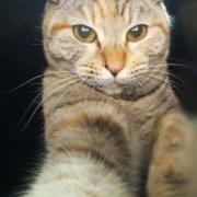 「猫飼い初心者」ペット用サプリ【免疫ミルク】の本商品モニター募集!の投稿画像