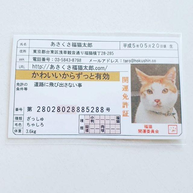 口コミ投稿:#あさくさ福猫太郎#浅草名物#monipla #あさくさ福猫太郎ショップファンサイト参加中
