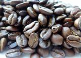 「世界一高価なシベットコーヒー」の画像(5枚目)