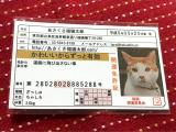 【あさくさ福猫太郎】開運 豆お守りの画像(4枚目)