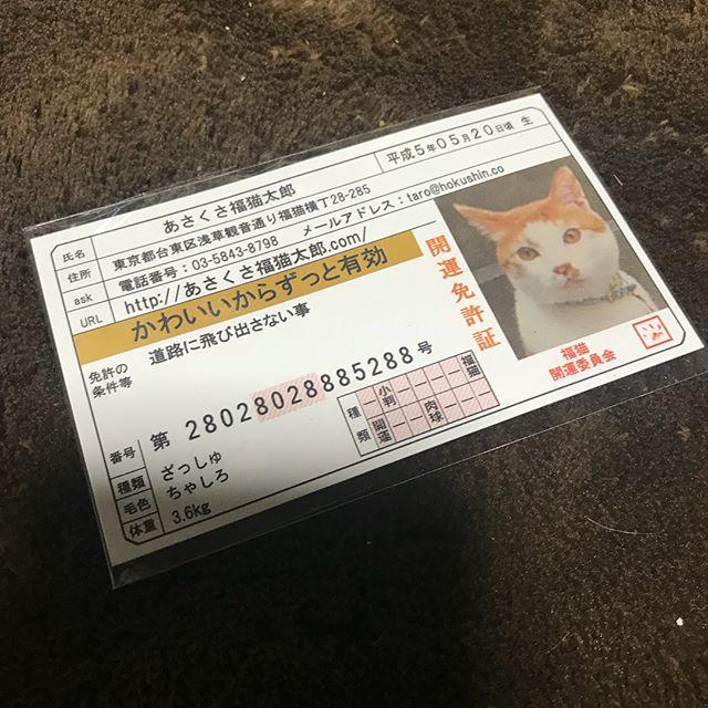 口コミ投稿:モニターで幸運の豆お守りいただきました。猫が写ってたので子供達にこの直後思いっ…