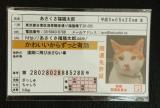 あさくさ福猫太郎 開運 豆お守り♪の画像(2枚目)