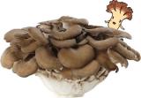 ☆20 カレーで菌活【ホクトのマイタケ まるごと使った菌活・贅沢カレー】の画像(2枚目)
