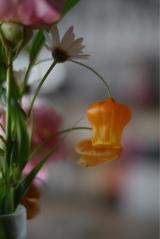 「嬉しいサービス★お花の定期便Medelu」の画像(10枚目)