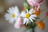 「嬉しいサービス★お花の定期便Medelu」の画像(7枚目)