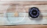 【モニター】レイチェルワイン ミネラルメイクアップの画像(1枚目)