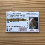 可愛い福猫ちゃんの開運グッズ☆で福よ来い来いの画像(1枚目)