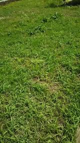 ぐんぐん伸びる雑草の草むしり大嫌い!!! の画像(1枚目)