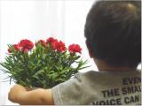 増えるカーネーションの花の画像(8枚目)