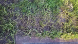 ぐんぐん伸びる雑草の草むしり大嫌い!!! の画像(8枚目)