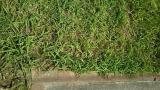 ぐんぐん伸びる雑草の草むしり大嫌い!!! の画像(7枚目)