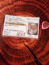 あさくさ福猫太郎の画像(1枚目)