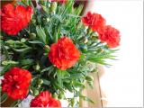 増えるカーネーションの花の画像(6枚目)
