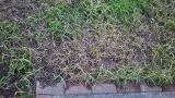 ぐんぐん伸びる雑草の草むしり大嫌い!!! の画像(9枚目)