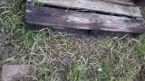 ぐんぐん伸びる雑草の草むしり大嫌い!!! の画像(13枚目)