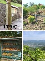 高野山~町石道180町を歩く!の画像(4枚目)