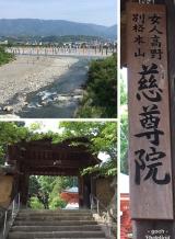 高野山~町石道180町を歩く!の画像(2枚目)