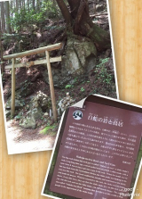 高野山~町石道180町を歩く!の画像(12枚目)