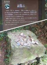高野山~町石道180町を歩く!の画像(7枚目)