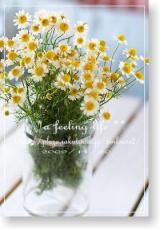 「カモミールティにしてみました | *a feeling life **   今日の気になるもの - 楽天ブログ」の画像(1枚目)