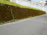 ラウンドアップで道路脇の雑草駆除の画像(2枚目)