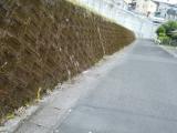ラウンドアップで道路脇の雑草駆除の画像(3枚目)