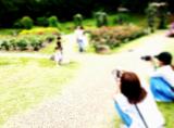 靭公園 バラ園の画像(3枚目)