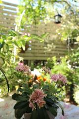 5月の庭から:毎日がばら色の画像(4枚目)