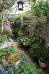 5月の庭から:毎日がばら色の画像(1枚目)