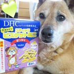 DHCの「犬用 スティックビスケットミニ ぱっちり」】です。 愛犬ケン太ももう11歳。目・視界等気になるお年頃☆そこで、ルテイン、ブルーベリー(ビルベリー)エキスといった、ぱっちりに役立つ成分…のInstagram画像