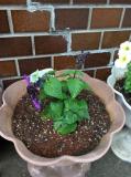 ブルー系のお花が届きました