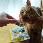 ねこちゃんにもDHCってあるのね!びっくり。うちのニャンズ美味しく食べてくれました😆ありがとうございました♥#DHC #DHCPET #贅沢けずり #愛猫 #monipla #株式会社ディーエ…のInstagram画像