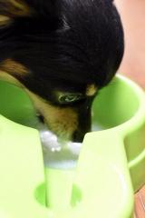「ペット用免疫ミルク「ペットアイジージー」モニター」の画像(4枚目)