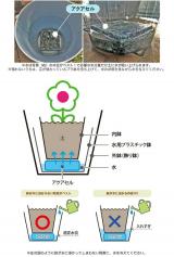 ★『紫陽花 ディープパープル』と植物を長持ちさせる特殊パッケージ『saxia (サクシア)』の感想(その2)の画像(4枚目)