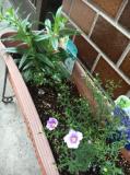ブルー系のお花が届きました 2回目投稿