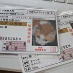 あさくさ福猫太郎の開運豆お守り2種類目♪是非とも12種類コレクションしたいな~浅草 待乳山聖天近くにリアルショップ、楽天モール内にネットショップあり。#猫 #ネコ #招き猫 #Sh…のInstagram画像