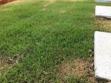 庭の芝生が伸びる様子 お花の植え替え・野菜の種まきで家庭菜園  楽天スーパーセール買ったもの - FREEQ LIFEの画像(2枚目)