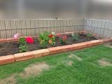 庭の芝生が伸びる様子 お花の植え替え・野菜の種まきで家庭菜園  楽天スーパーセール買ったもの - FREEQ LIFEの画像(5枚目)