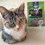 DHC『猫用 贅沢けずり マグロ』.青魚のサラサラ成分DHAとEPAを配合した猫用おやつ。.フードのトッピングやおやつにあげています。.#DHC#DHCPET#贅沢けずり#愛猫…のInstagram画像