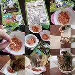 「 #猫用 #贅沢けずり #まぐろ 」#株式会社ディーエイチシー さまのモニターに参加中。#鶏ささみとさか の二種類。#青魚 の #サラサラ成分 #DHA #EPA を配合した…のInstagram画像