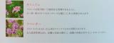 エイジングケア ♡ アヤナスの画像(3枚目)