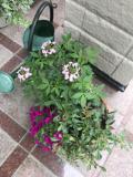 花がたくさん咲いて来ました!